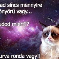 Grumpy Cat: Mert ronda vagy!