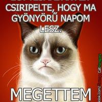 Grumpy Cat: Gyönyörű nap