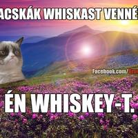 Grumpy Cat: A macskák whiskast vennének
