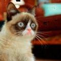 Grumpy Cat: Arcom amikor megtudom, hogy akciós a sör