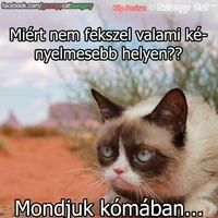 Grumpy Cat: Kényelmes hely