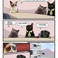 Grumpy Cat: Rossz ötlet