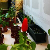 Összefoglaló és növényszámlálás