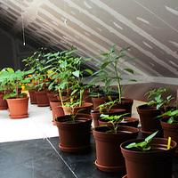 Fura dolgok a növényeken