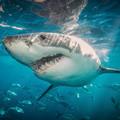 Mi tépte cafatokra a hatalmas cápát?