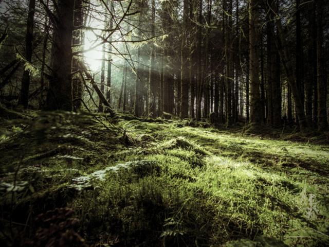Az elátkozott erdő