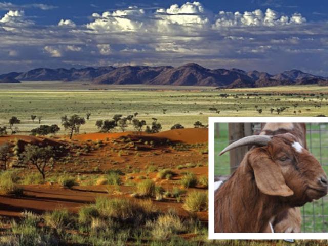 Gyilkos lény Namíbiában