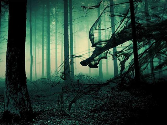 A Hója-erdő rejtélyei