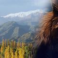 Az argentin farkasember