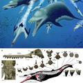 Felbukkant egy ötméteres delfin
