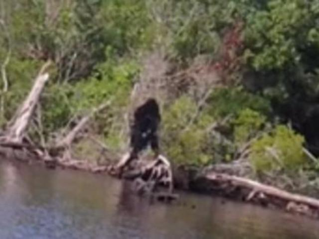 Kamera előtt a Bigfoot?