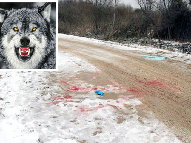 Farkastámadás Oroszországban