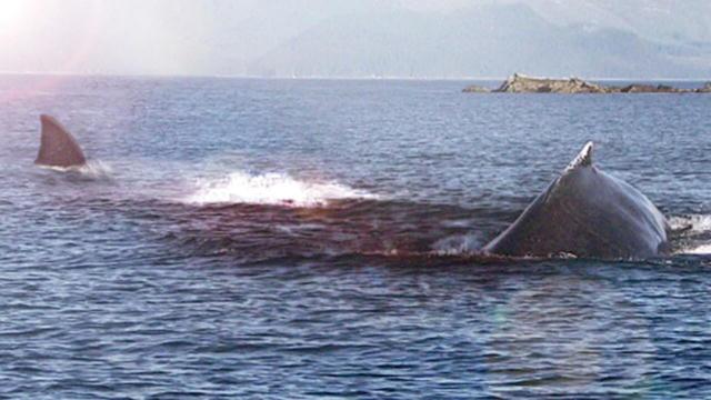 a gyilkos bálnának pénisze van milyen gyógyszerek erősítik az erekciót