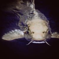 Bebizonyítom, hogy a nagyipari halászat kegyetlen