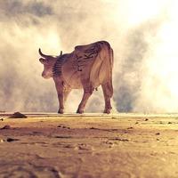A húsevés ugyanolyan káros, mintha letagadnánk a globális felmelegedés létezését