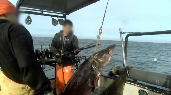 2018commercialfishing02_thresher_baseball-bat-04-mc1.jpg