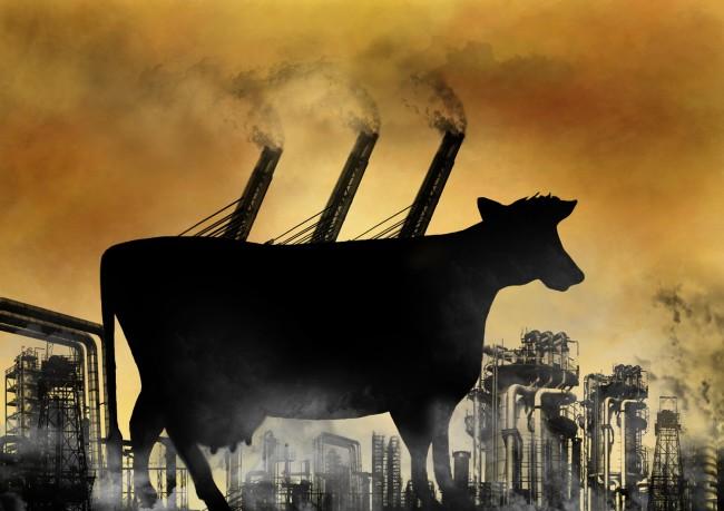 cattle-global-warming-methane-emissions-650x459.jpg
