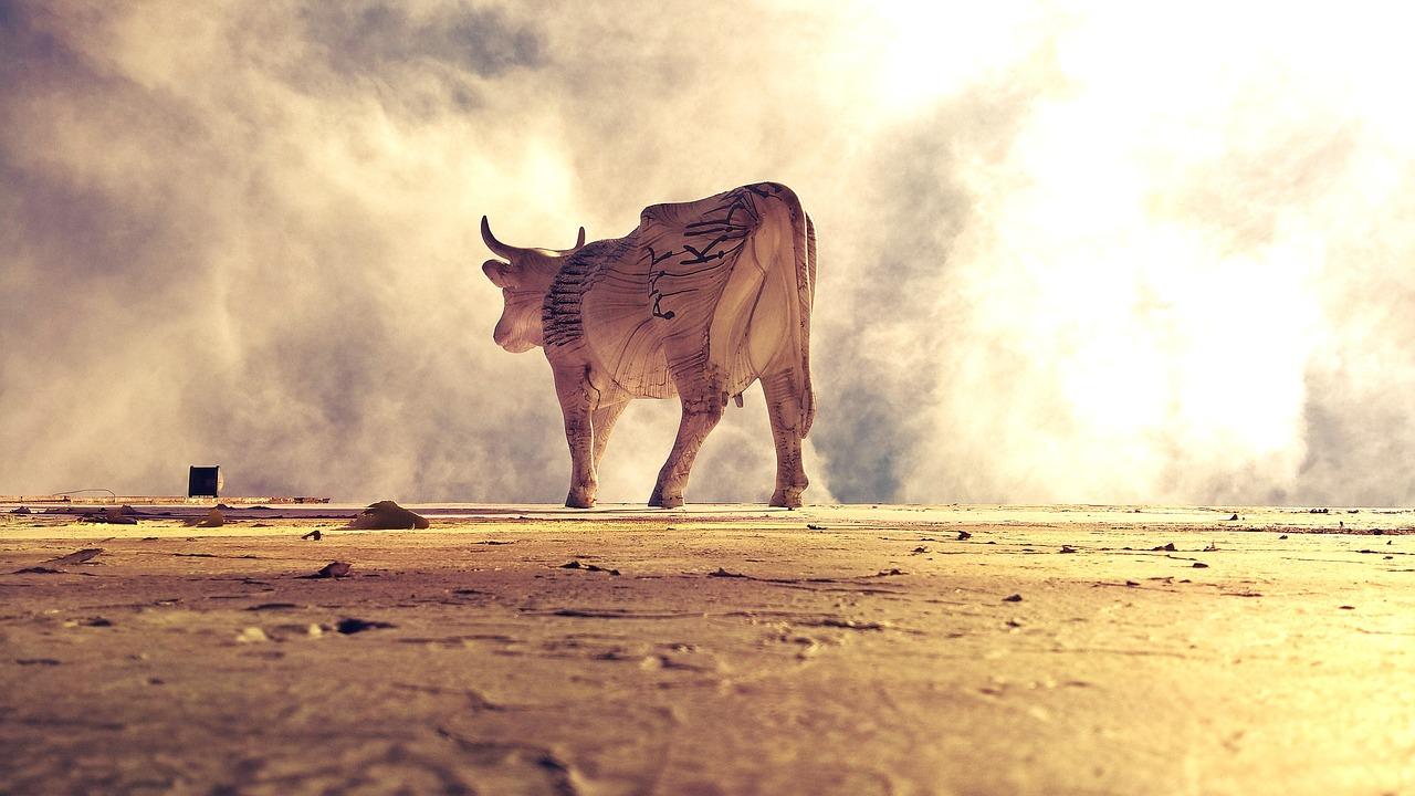 cow-2552582_1280.jpg