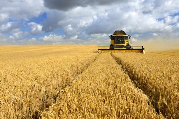 field-of-crops.jpg