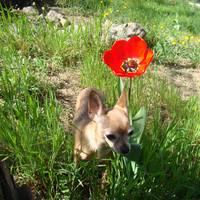 Bambinál még egy tulipán is nagyobb... :D