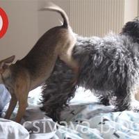 A hét cuki képe - Extrém kutyapóz