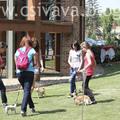 Csivava Majális 2011 - kutyaruha divatbemutató és csivava kommandó