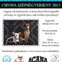 Csivava szépségverseny 2012