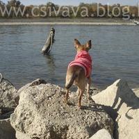 Napi séta a Duna parton