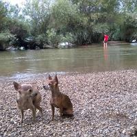 Kavics mentés és talált kutya
