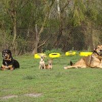 Megbeszélés és gyakorlatozás a Pólus Kutyakiképző Iskolában