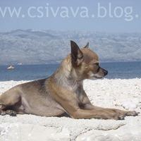 Nyár 2012 - Horvátország