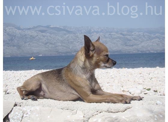 csivava-blog-2012-zadar-1.jpg