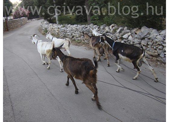 csivava-blog-2012-zadar-994.jpg