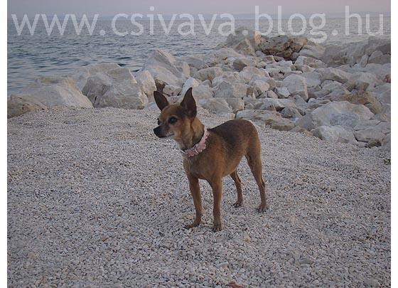 csivava-blog-2012-zadar-995.jpg