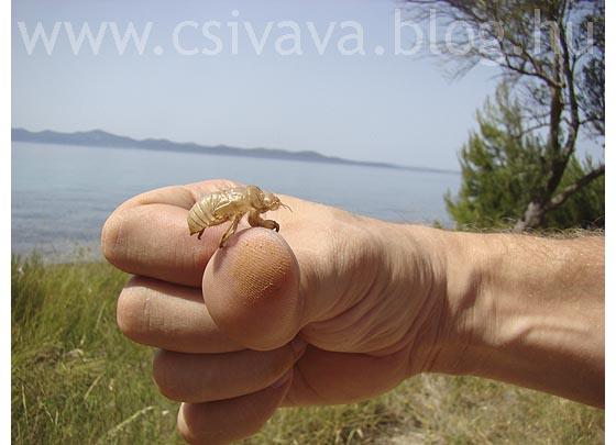 csivava-blog-2012-zadar-999.jpg