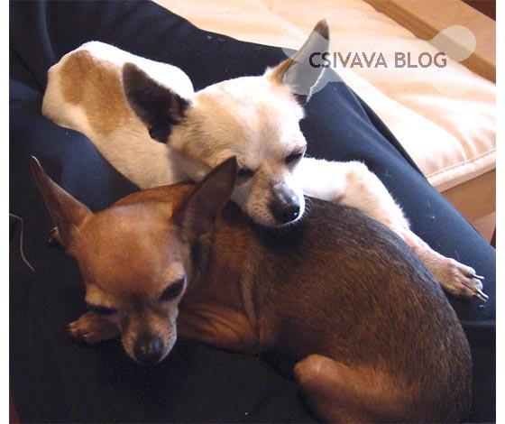 bambi-blog-2013-2.jpg
