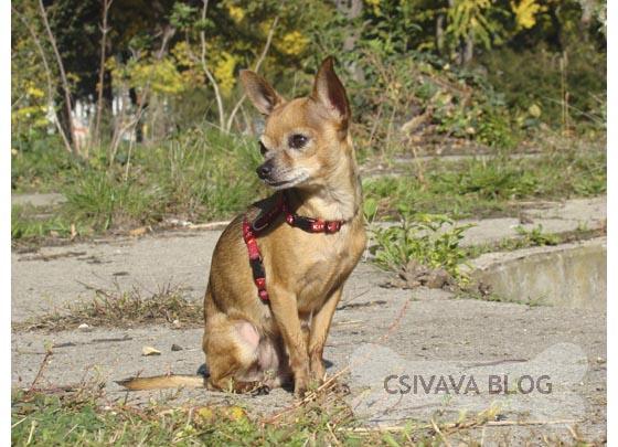 bambi-blog-2013-csivava.jpg