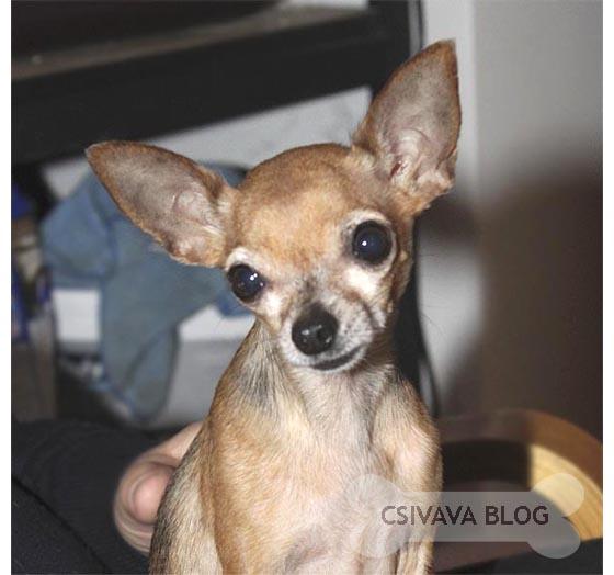 bambi-blog-2013-mehgyulladas-2.jpg