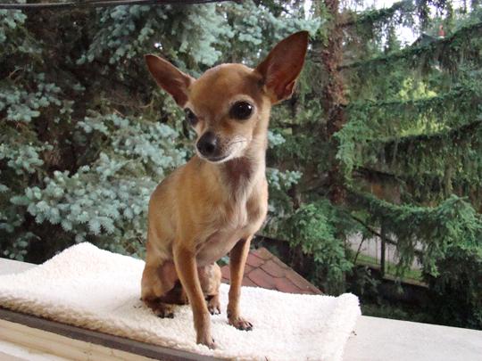bambi blog 2014 tahi.jpg