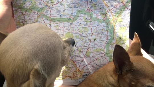 bambi-blog-2014-utban-pragaba-picur-terkep.jpg