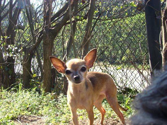 csivava blog 2015 grill ápr bambi.jpg