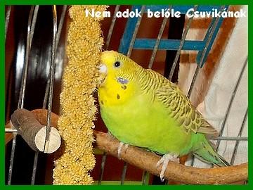 13_04_09_nem_adok_belole_csuvikanak.jpg