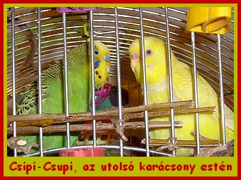 cspicsupi_16_12_26.jpg