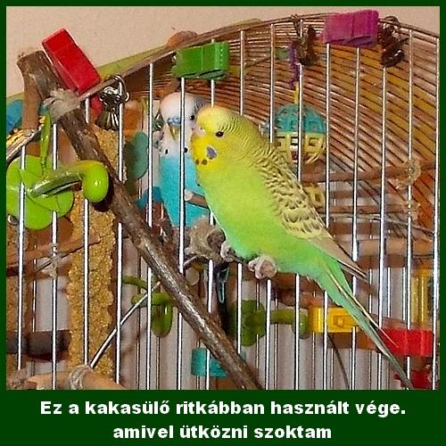 13_05_24_kint_es_bent.jpg