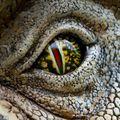A szem alatti Jurassic park