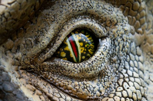 t-rex_eye.jpg