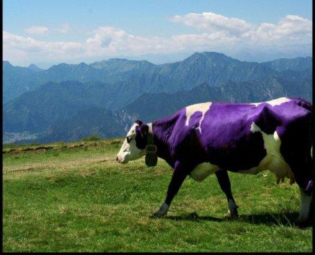 Milka_Cow_by_MariRowana_1.jpg
