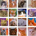 Cicák a macskaeledel csomagolásokon