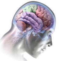 Neuromarketing: agykutatás a vásárlás szolgálatában