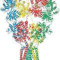 Áttörés az idegkutatásban - meghatározták a glutamátreceptor szerkezetét